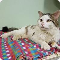 Adopt A Pet :: Jaspurr - Murphysboro, IL