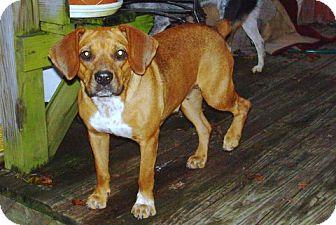 Hound (Unknown Type) Mix Dog for adoption in Danbury, Connecticut - Tessa