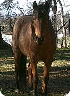 Grade/Pony - Other Mix for adoption in Elverta, California - Punky