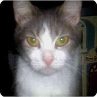 Adopt A Pet :: Karen - Summerville, SC
