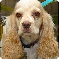 Adopt A Pet :: Luke - Sugarland, TX