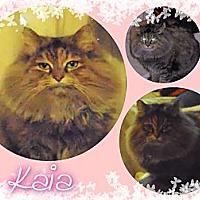 Adopt A Pet :: Kaia - Washington, DC