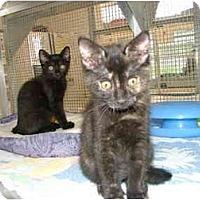 Adopt A Pet :: Smokey - Winter Haven, FL