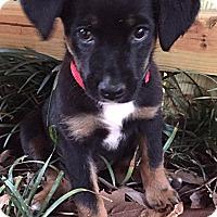 Adopt A Pet :: Monroe - Somers, CT