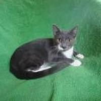 Adopt A Pet :: Blake - Sarasota, FL