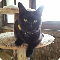 Adopt A Pet :: Nanny - Cleveland, OH
