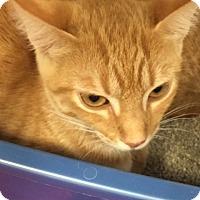 Adopt A Pet :: Skye - Chattanooga, TN