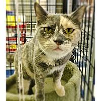 Adopt A Pet :: Jesse - Redding, CA