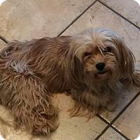 Adopt A Pet :: 427 - Homer Glen, IL