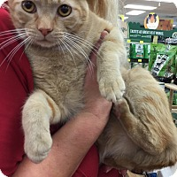 Adopt A Pet :: Chance - Miami Shores, FL