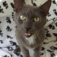 Adopt A Pet :: Duke - Floral City, FL