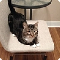 Adopt A Pet :: Russell - Vancouver, BC