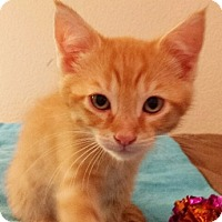 Adopt A Pet :: Carrot - North Highlands, CA