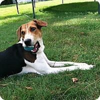 Adopt A Pet :: Kali - East Sparta, OH