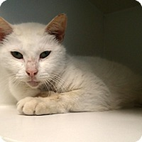 Adopt A Pet :: Jon Snow - Newport, NC