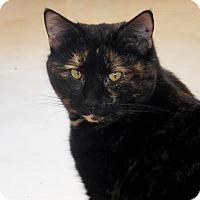 Adopt A Pet :: Joy - Palo Cedro, CA