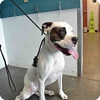 Adopt A Pet :: NUMBER 9 - ID#A1684372 - Beverly Hills, CA