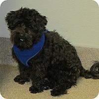 Adopt A Pet :: Charley - Gilbert, AZ