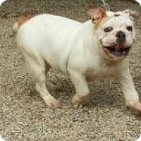 Adopt A Pet :: Piper ADOPTED!! - Antioch, IL