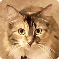 Adopt A Pet :: Snuggles - Davis, CA