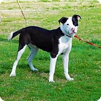 Adopt A Pet :: Barney-020803k - Tupelo, MS