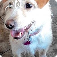 Adopt A Pet :: Clarisse - San Diego, CA