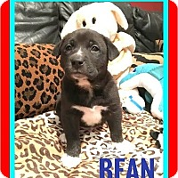 Adopt A Pet :: Bean - Milton, GA