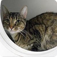 Adopt A Pet :: Bella - Topeka, KS