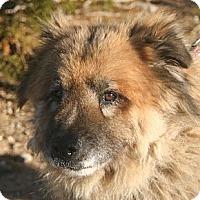 Adopt A Pet :: Chow Mein - Littlerock, CA