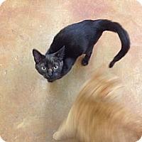 Adopt A Pet :: Beguira - Lake Charles, LA
