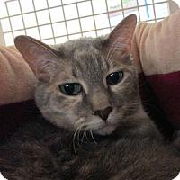 Adopt A Pet :: Snickerdoodles - Gilbert, AZ