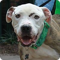 Adopt A Pet :: Jimmy - Snellville, GA