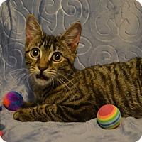 Adopt A Pet :: Lisa - Oyster Bay, NY