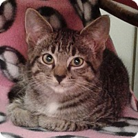 Adopt A Pet :: Eggnog - N. Billerica, MA