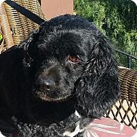 Adopt A Pet :: Brando - Santa Barbara, CA