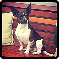 Adopt A Pet :: Beemer - Grand Bay, AL