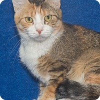 Adopt A Pet :: Josie - Elmwood Park, NJ