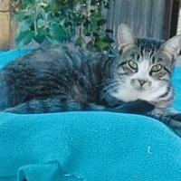 Adopt A Pet :: Maiya - Calimesa, CA