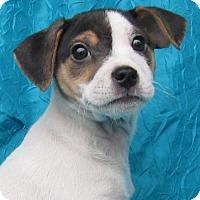 Adopt A Pet :: Glenn Jenkins - Cuba, NY