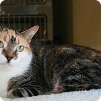 Adopt A Pet :: Ginger - Bridgewater, NJ