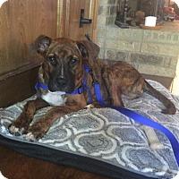 Adopt A Pet :: Gerald - Dallas, TX