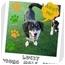 Photo 1 - Dachshund Mix Dog for adoption in Elyria, Ohio - Lucky
