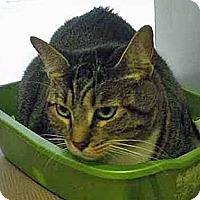 Adopt A Pet :: Vernon - Brooklyn, NY