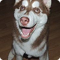 Adopt A Pet :: Buddy Bear the Trailblazer - Horsham, PA