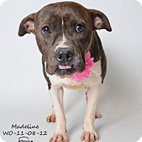 Adopt A Pet :: Madeline - In Foster Home - Marrero, LA