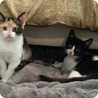 Adopt A Pet :: Arya and Tyrion - Raritan, NJ