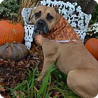 Adopt A Pet :: ASIA - Oswego, IL