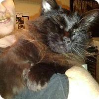 Adopt A Pet :: Cora - Walla Walla, WA