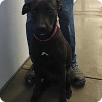 Adopt A Pet :: Denzah - Paducah, KY