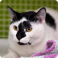 Adopt A Pet :: Francis - Troy, MI
